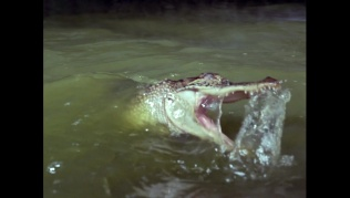 attackofthealligators00702